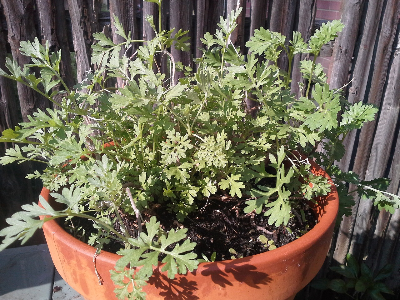 Planting a Cocktail Garden: Consider Perennials